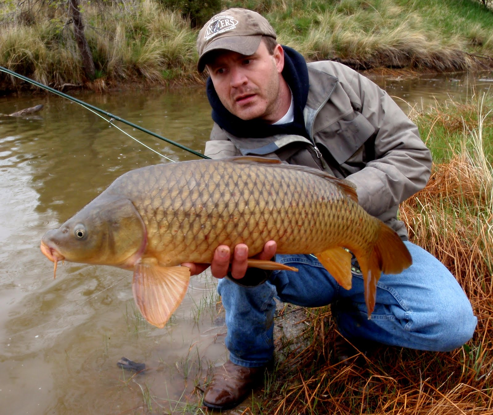 Colorado Fly Fishing Reports: Fly Fishing For Carp (Directory)