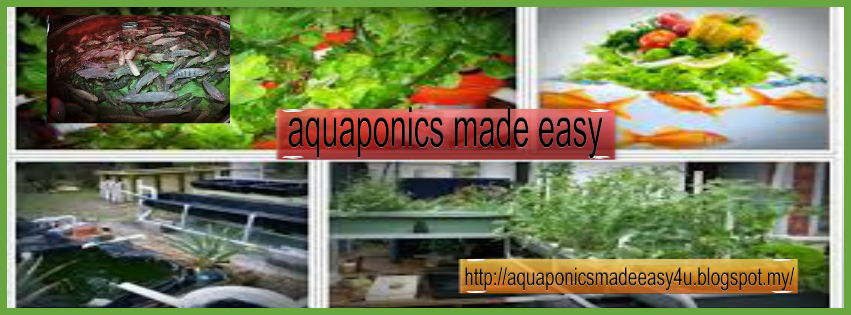 aquaponics made easy