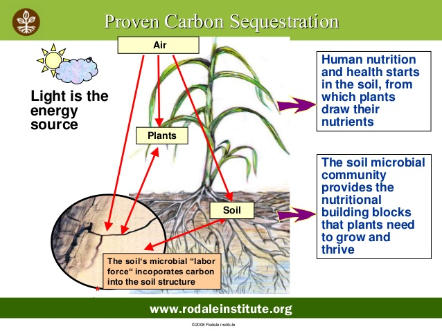 Why not start today backyard carbon sequestration is for 0 4 soil carbon
