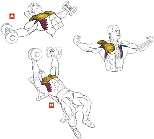Что надо делать чтобы накачать грудные мышцы дома