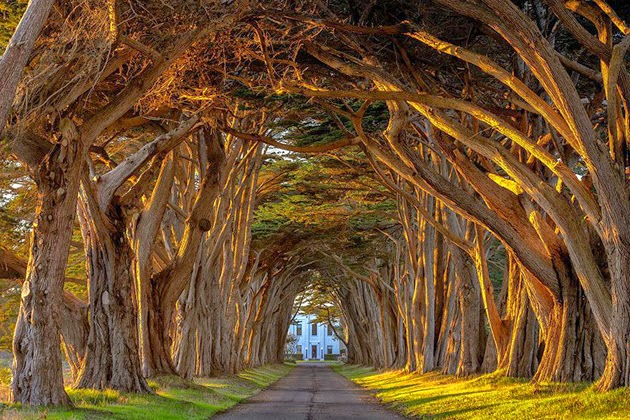 Tree Tunnels In The World