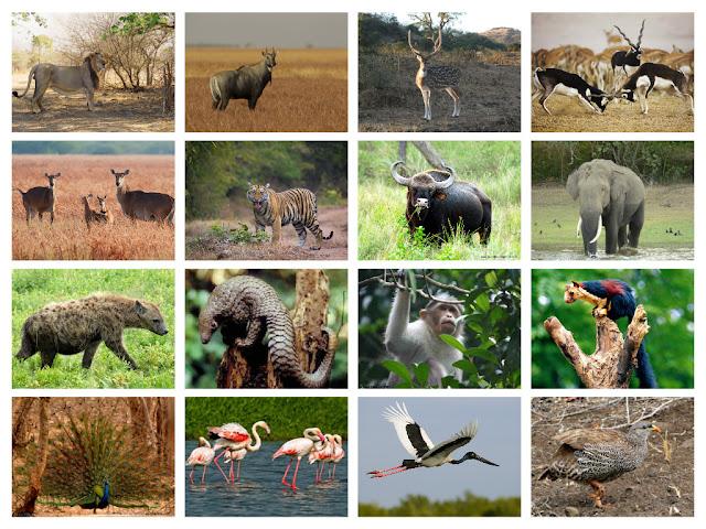 voyage la faune et la flore en Inde