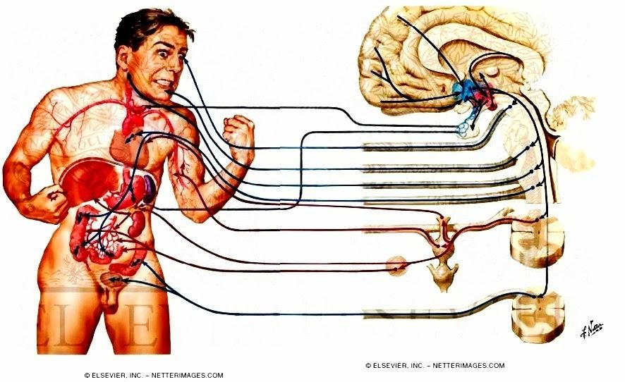 Psicología Médica: SISTEMA ENDOCRINO Y CONDUCTA