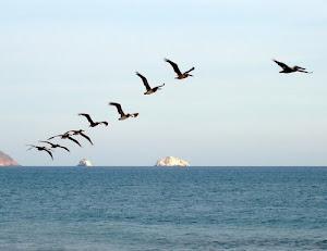 ფრინველები
