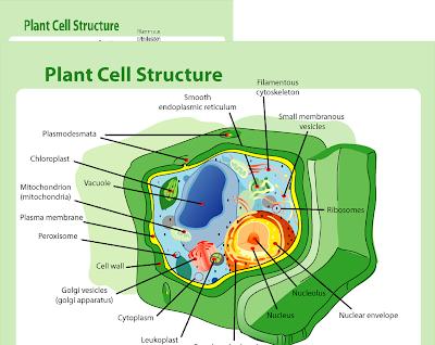 Struktur Sel Tumbuhan (Struktur Sel Tanaman)