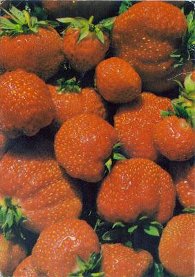Postcard of strawberries