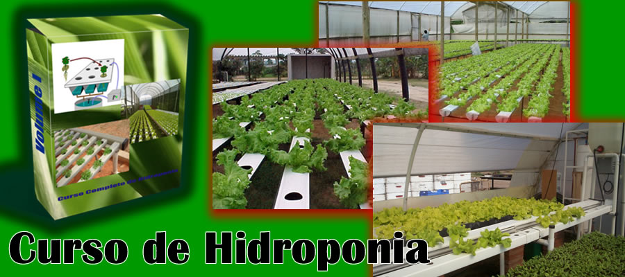 cultivo em hidroponia,curso de hidroponia,cultivo de hidroponia,cultivo hidroponicos