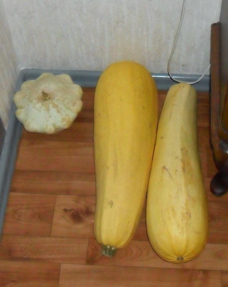 Сортирую и переношу овощи для хранения в кладовочку