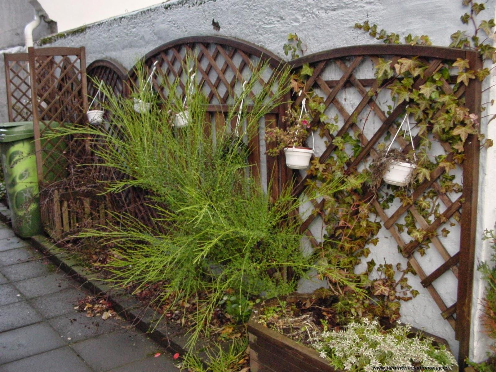 Jardineria eladio nonay celos as jardiner a eladio nonay for Celosias de jardin