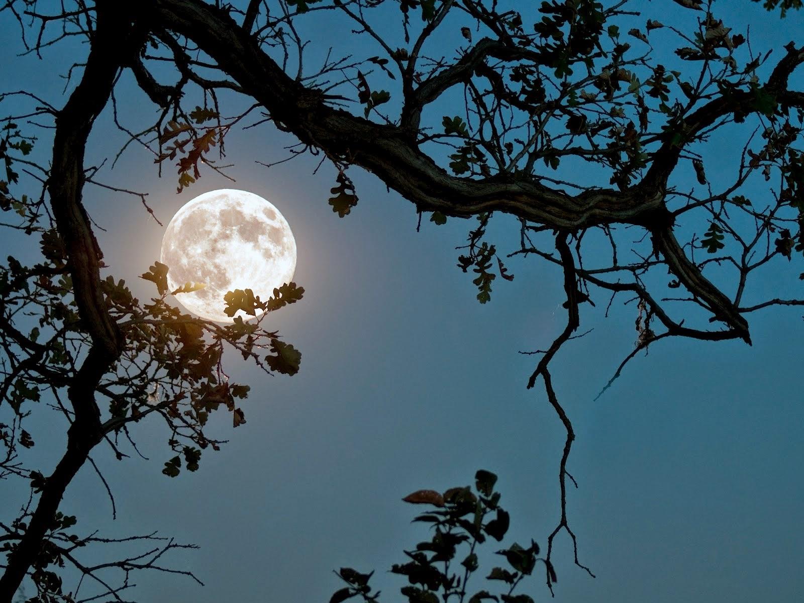 trees night moon blotch - photo #36