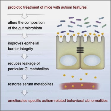 ASD and Gut Microbiota