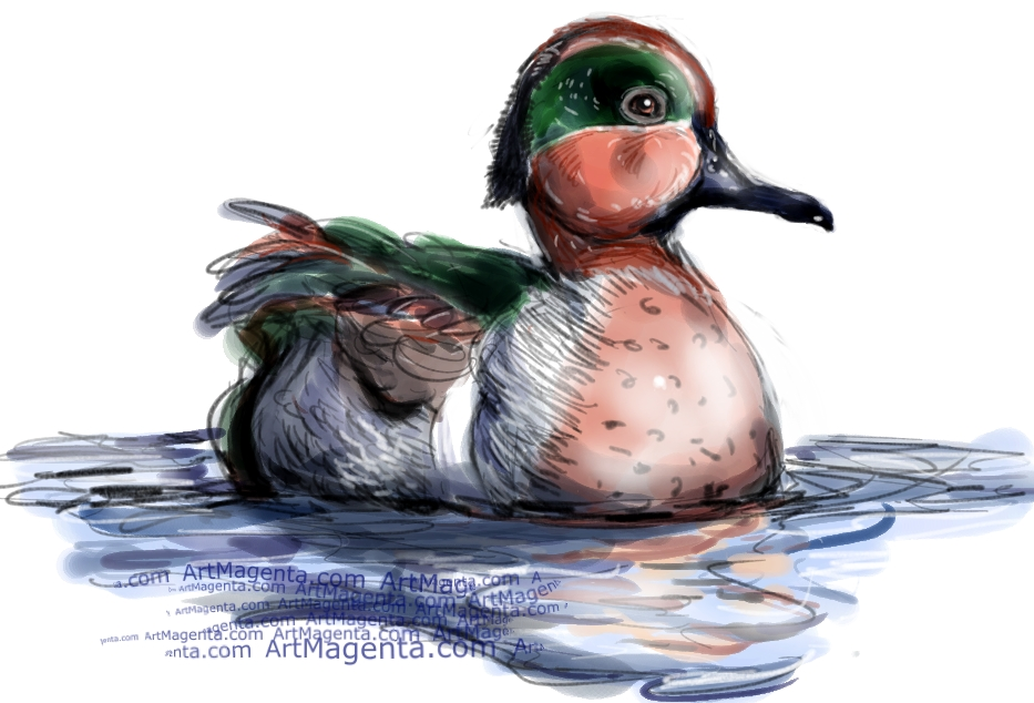 Green-Winged Teal sketch painting. Bird art drawing by illustrator Artmagenta