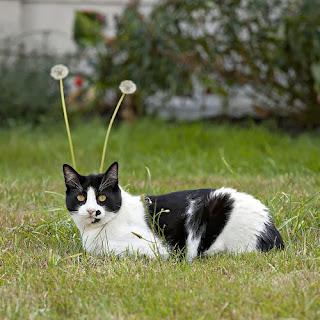 cat bunny ears