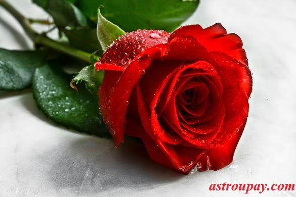 Astrology Benefit and Use of Rose Flower