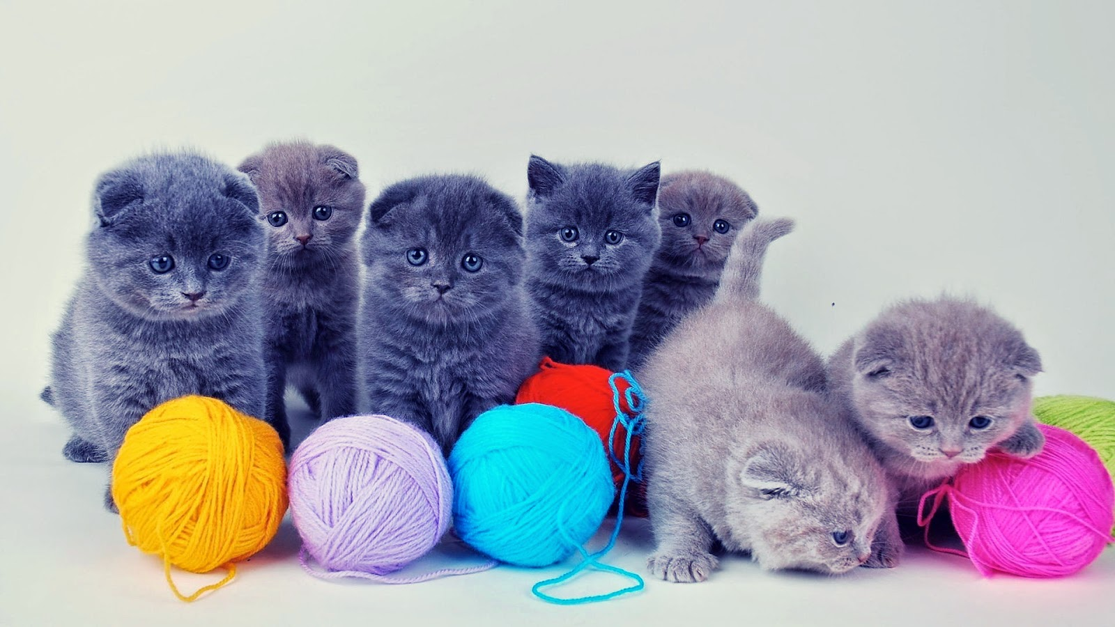 Mèo siêu cute