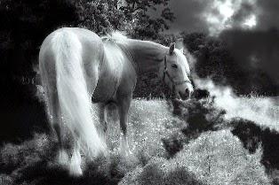 foto di cavalli bianchi fatati