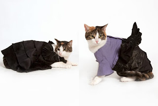 Cats in Opening Ceremony clothes