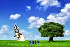Символ -Коза, стихия - дерево, цвет - синий(зеленый)