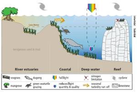 Mengenal Lamun (seagrass)