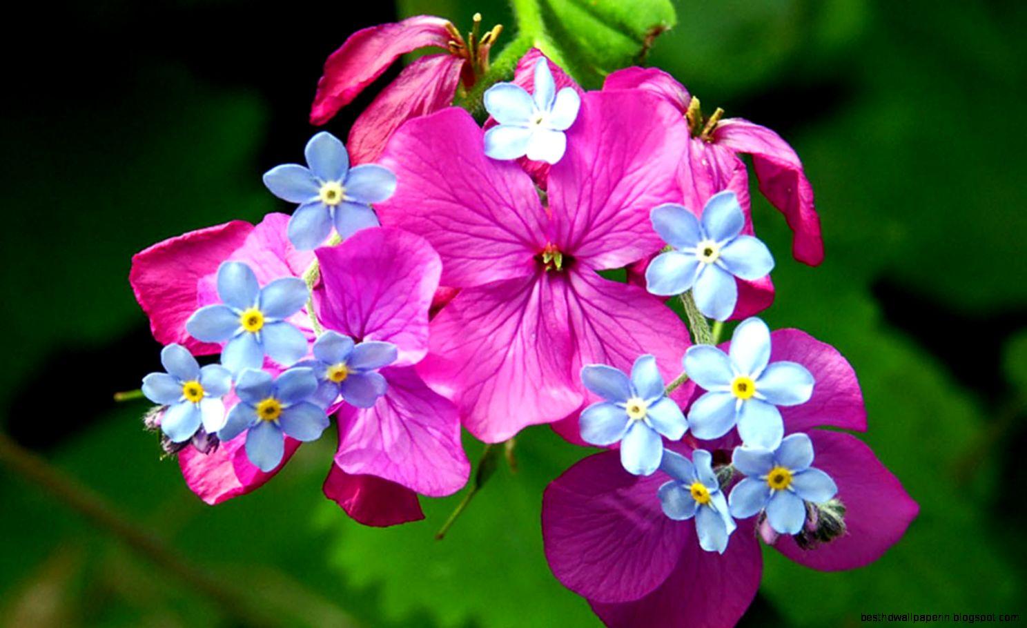 Springtime Flowers Desktop Background Best Hd Wallpapers