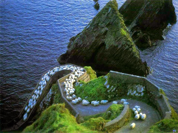 Sheep highway-Ireland