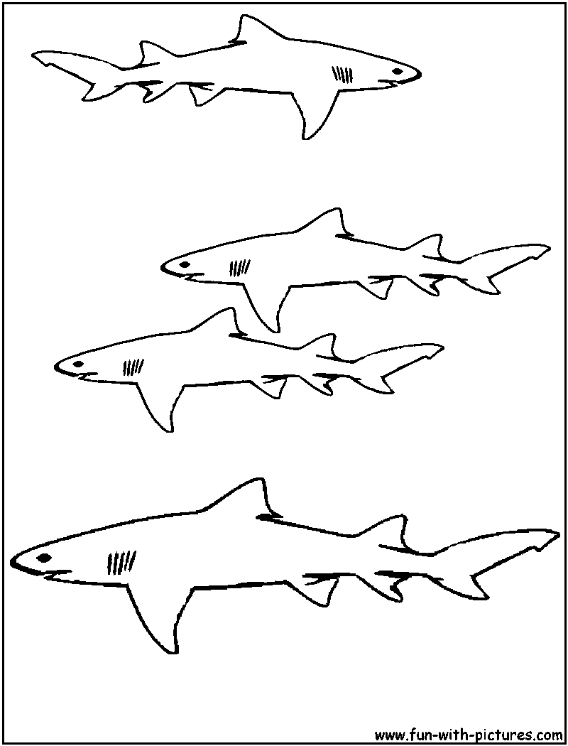 Coloring Pictures Of Sharks