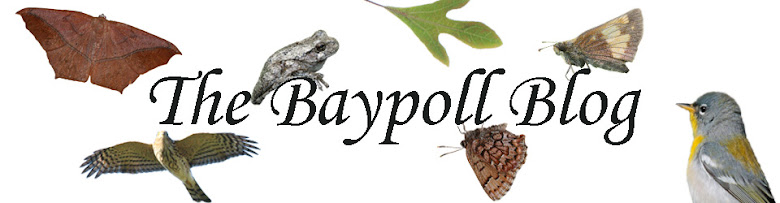 The Baypoll Blog