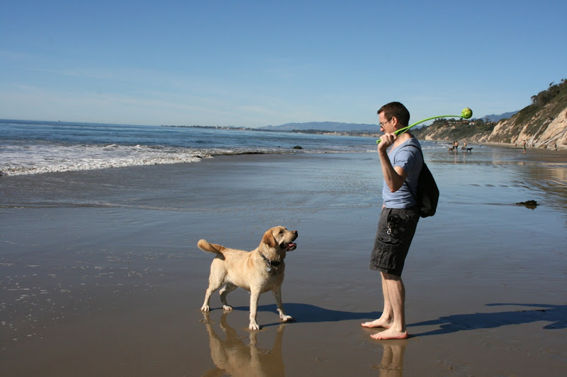 Hendrys Dog Beach Santa Barbara