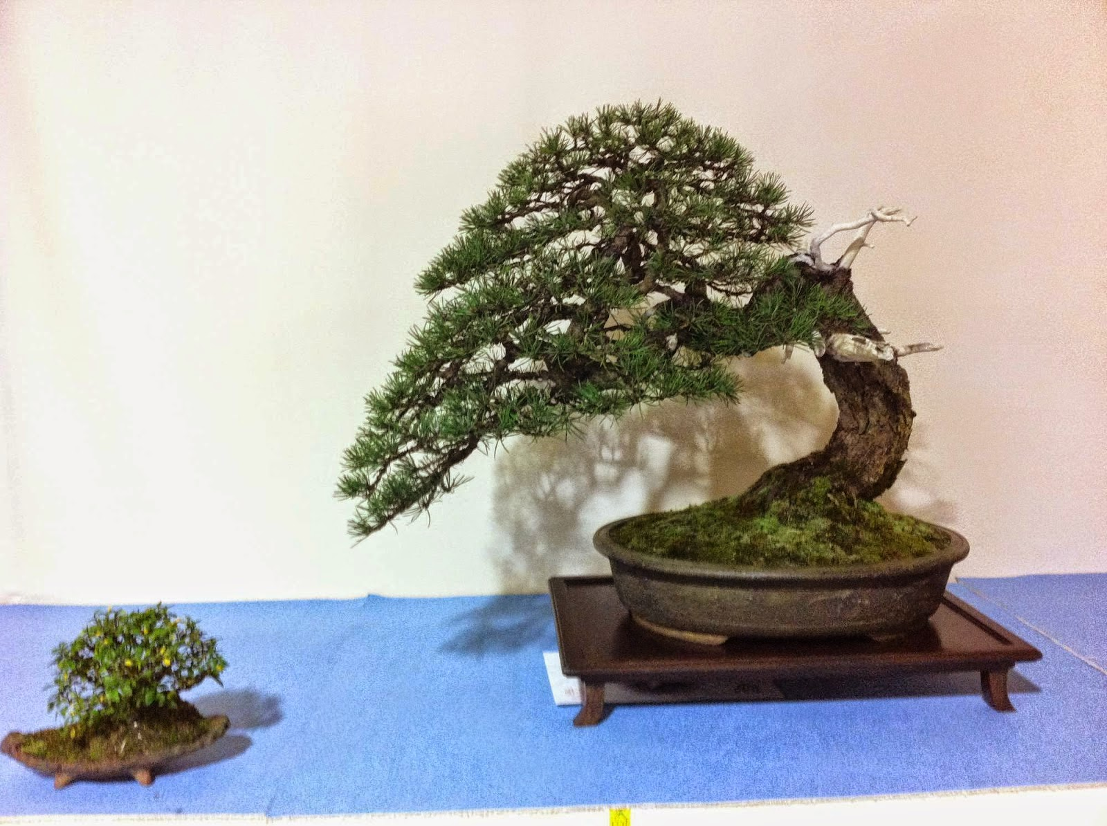 Leaf Brothers Czech National Bonsai Convention 2014