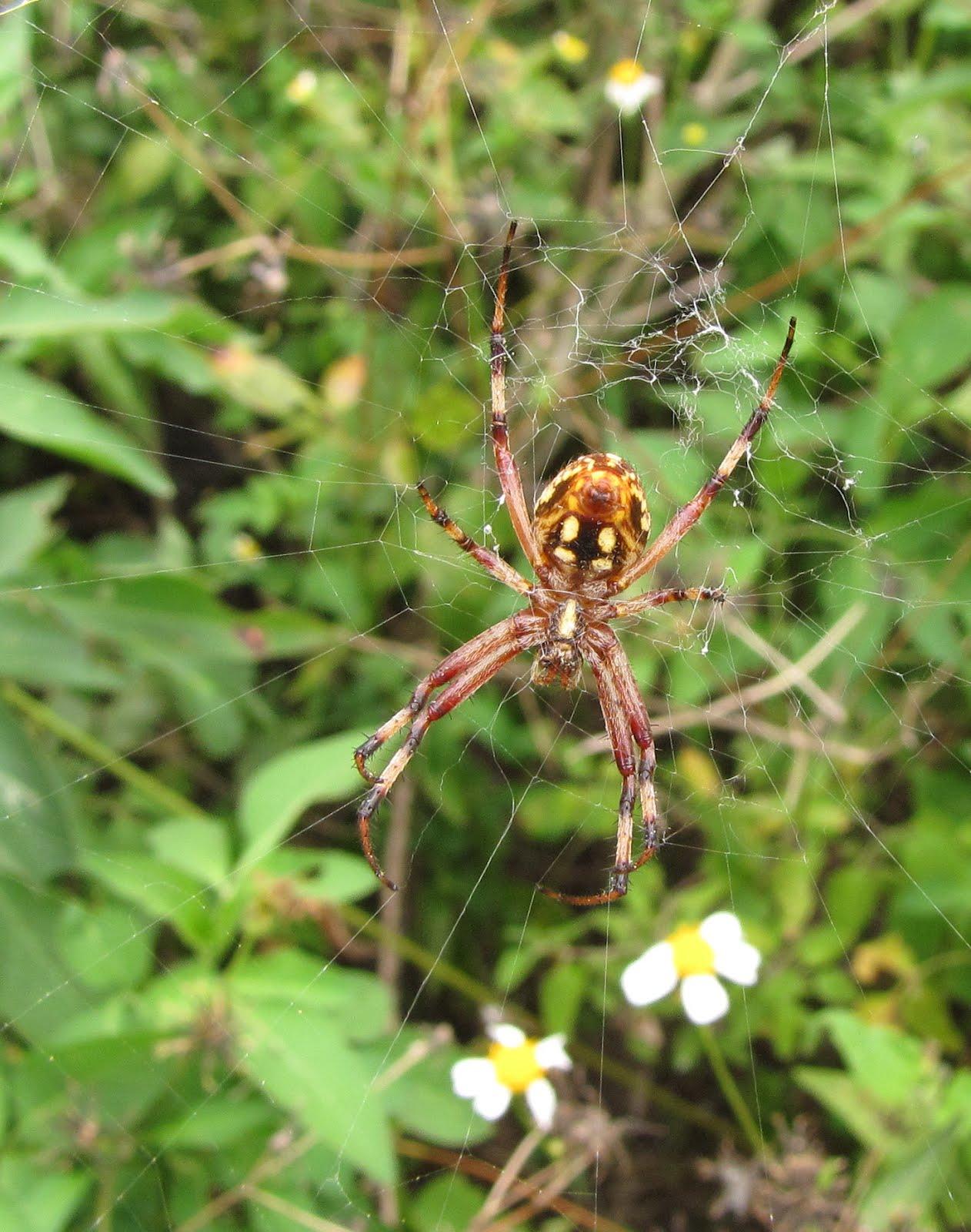 N Spiders Bug Eric: Spide...