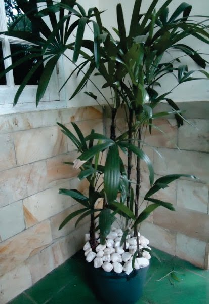 Palm Wregu