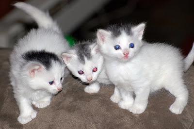 Pelik! Kari Daging Kucing Yang Enak Dan Lazat