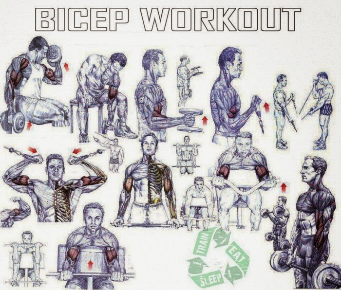 Best Exercises For Building Bicep Peak