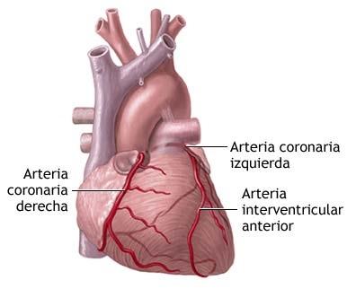 Biología Humana: SISTEMA CIRCULATORIO: Corazón (3° parte)