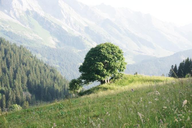 Paysage du massif des aravis en période estivale
