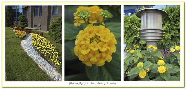 Желтый цвет 1
