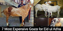7 Most Expensive Goats for Eid ul Adha