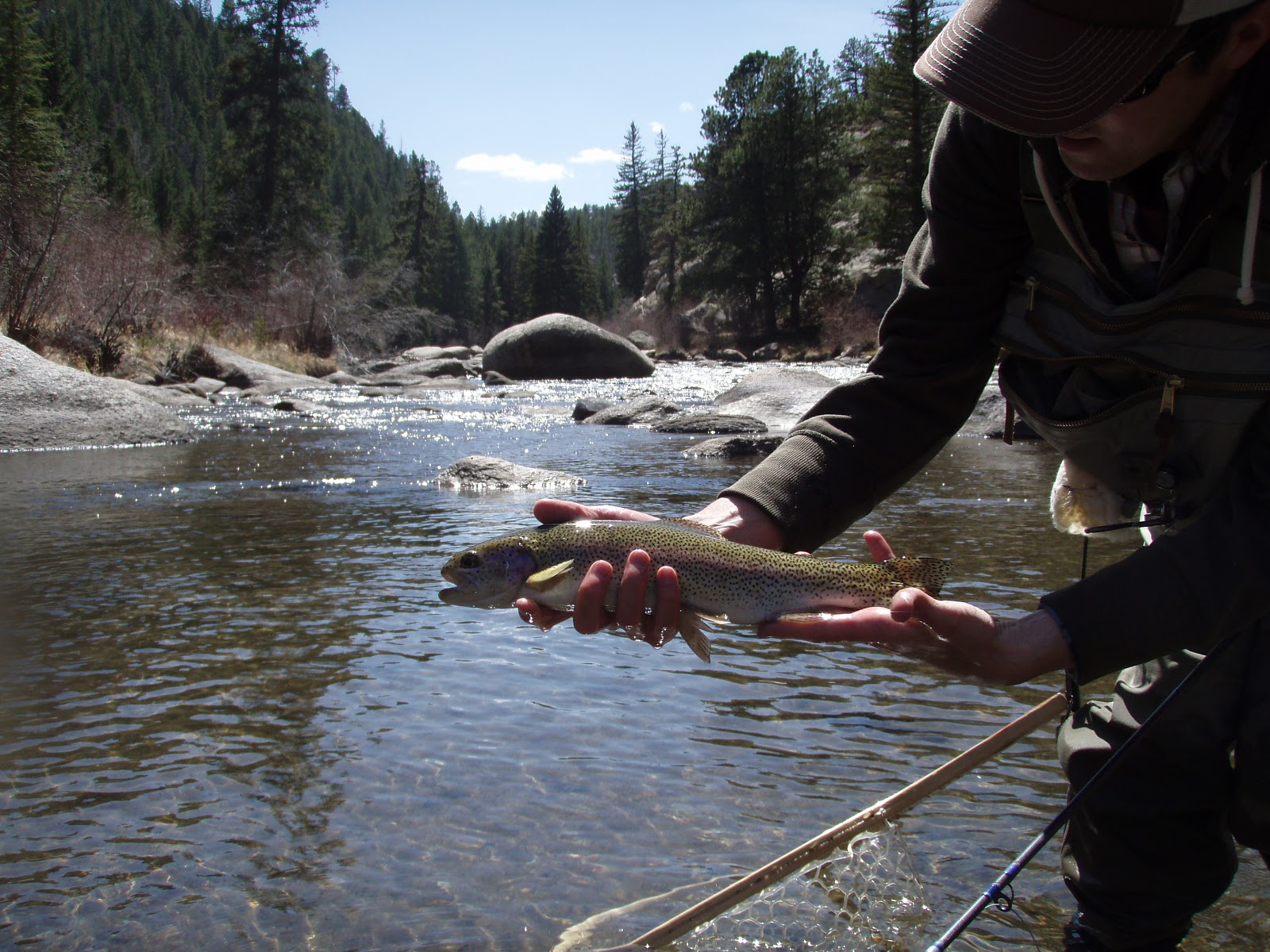 The fly fishing mind of jeff allen south platte 11 mile for Eleven mile canyon fishing report