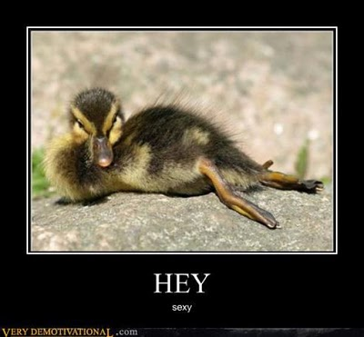 Funny Image Clip: Funny Animal Demotivational Posters ...