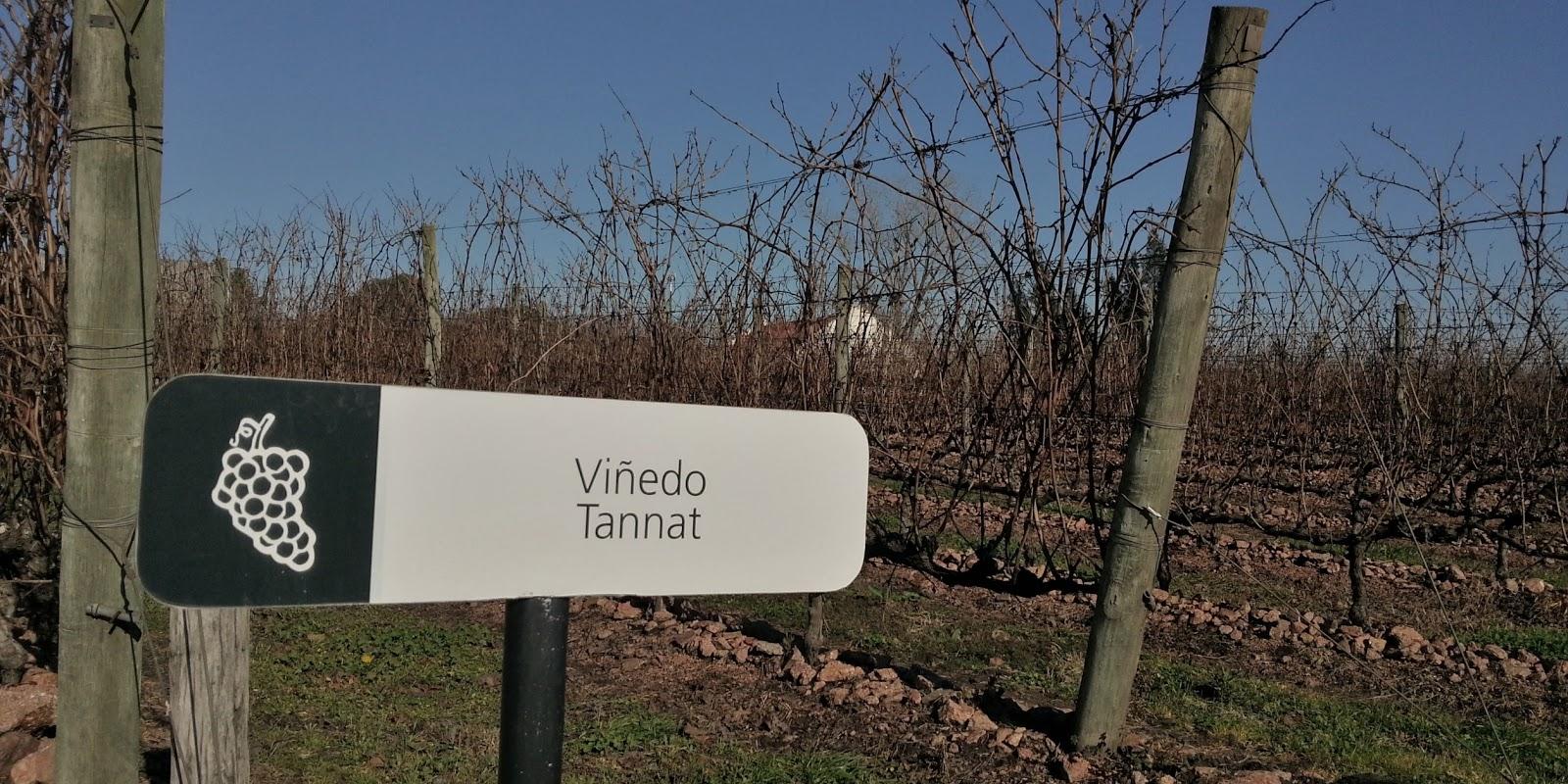 Artigo sobre o Uruguai e seus vinhos!