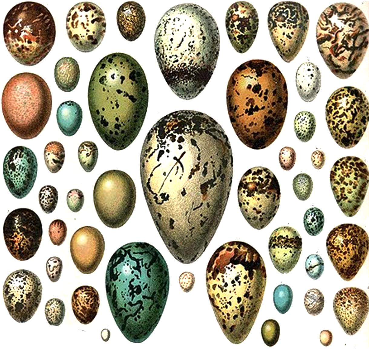 wild birds unlimited why are bluebird eggs blue