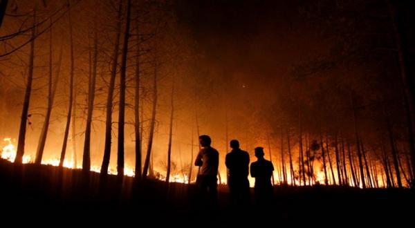 Hutan Cantayan Purwakarta Terbakar