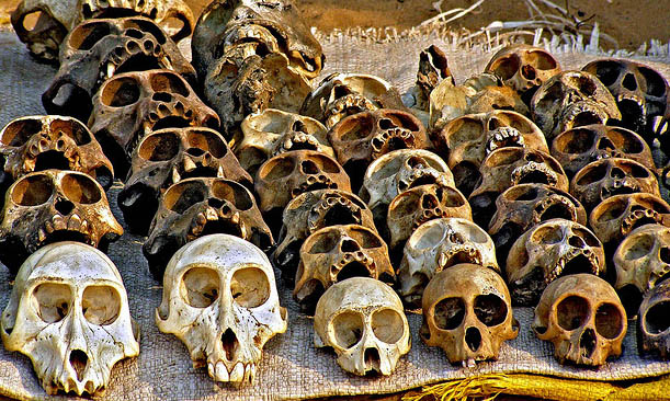 Dead monkey skulls on voodoo fetish market