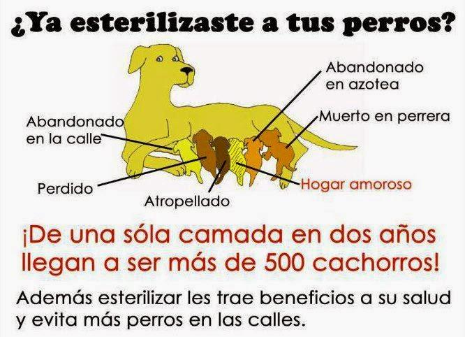 Resultado de imagen para esterilizacion de perros