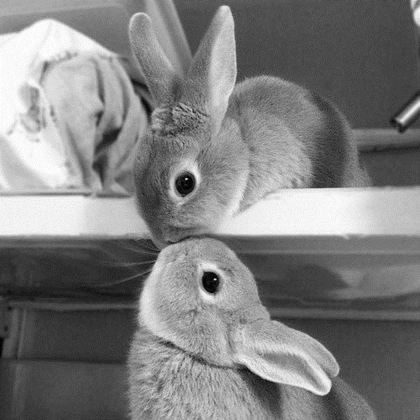 bunnies kissing, cute bunny picture, cute bunny