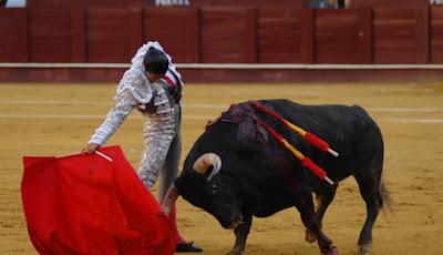 ¿A los toros les gusta el color rojo?