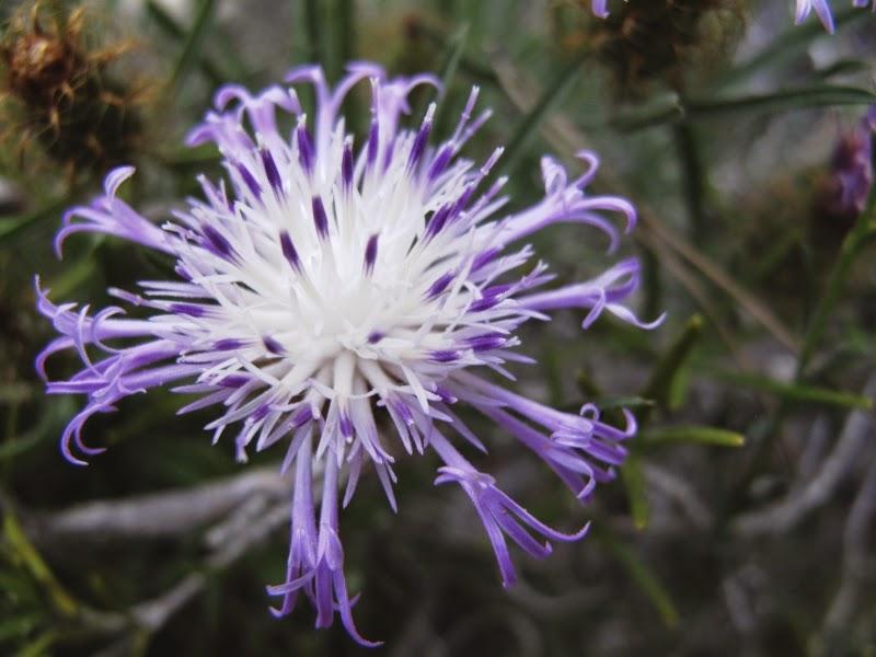 flor trobada a Móra d'Ebre