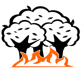 Natural Disasters Forest Fire