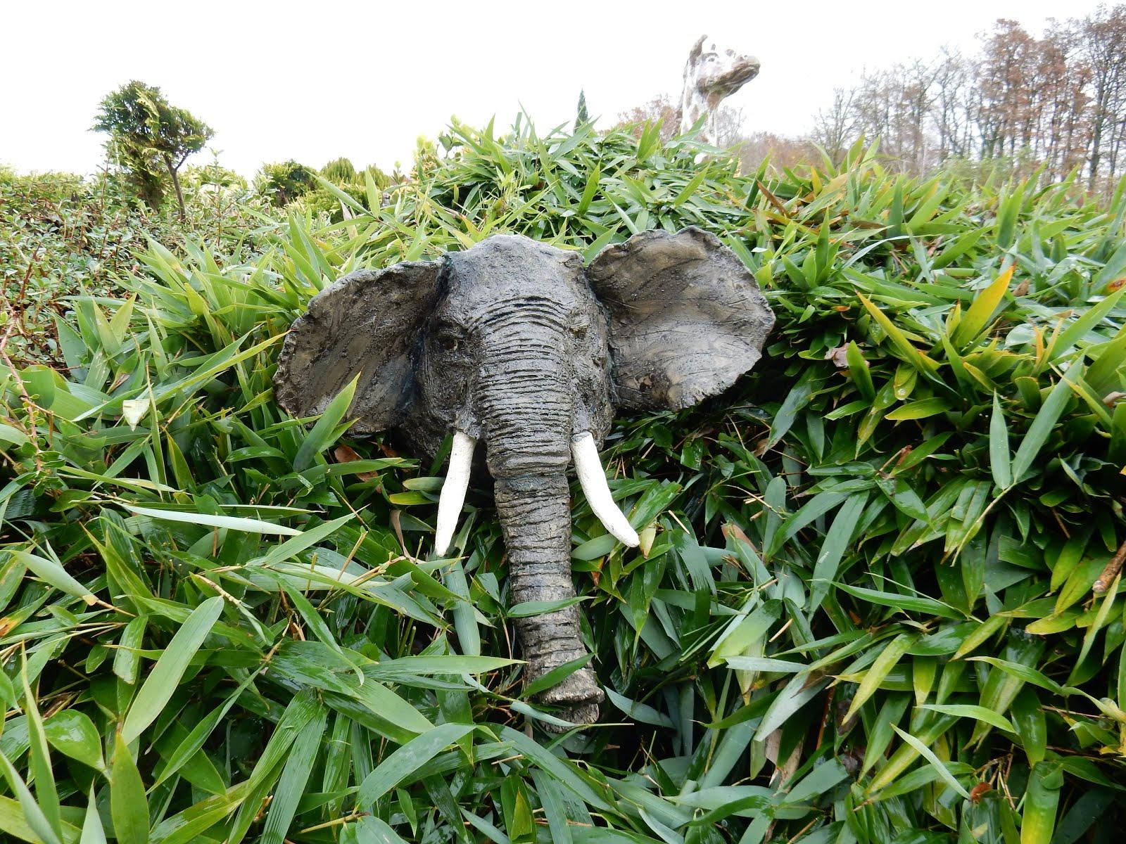 éléphant dans les bambous le long de la piscine