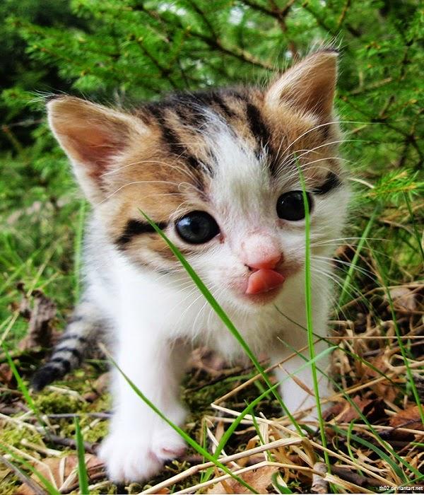 Photo chat mignon et drôle